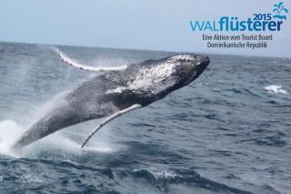 g-Springender-Wal1-320x213
