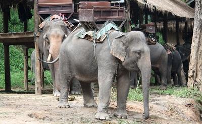 ElefantesenEntretenimiento